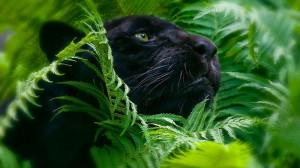 «Фундэкс» проводит акцию в защиту редких видов животных