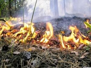 Винтовые сваи «Фундэкс» защитят от степных пожаров