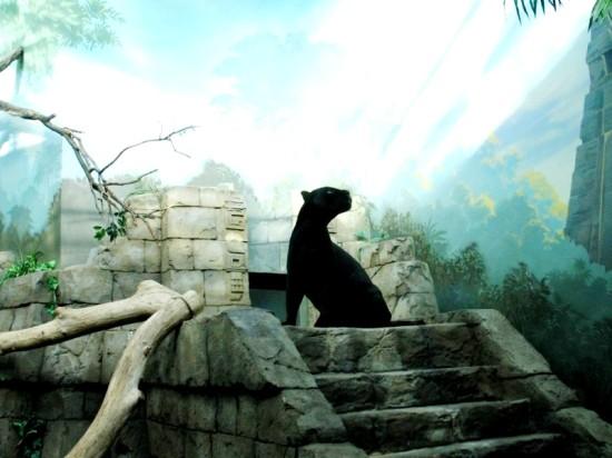 В компании «Фундэкс» проектируют новый вольер для подшефного ягуара