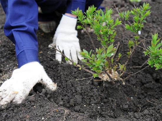 Во всероссийском экологическом субботнике «Зеленая весна» принимают участие все подразделения «Фундэкс»
