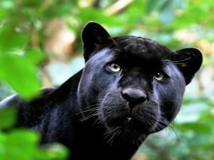 Ягуар Рок – символ бережного отношения технологии «Фундэкс» к природе