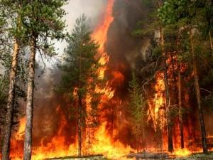 В Сибири горят леса. Как снизить последствия пожаров, знают в «Фундэкс»