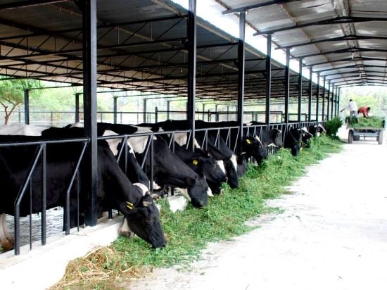Винтовые сваи «Фундэкс» - универсальная и надежная опора для фермерских построек