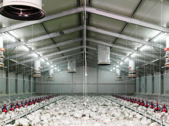 Технология «Фундэкс» - универсальная основа сельскохозяйственных объектов