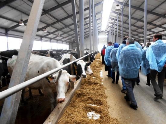 Под Воронежем с применением технологии «Фундэкс» построят молочный комплекс