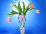 С 8 марта всех женщин поздравляет компания «Фундэкс»